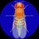 Drosophila Genetics Lab